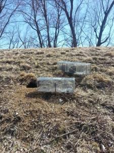Groundhog nuisance on local levee