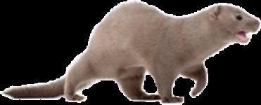 mink2