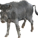 Feral_Hog Cut Out - Copy